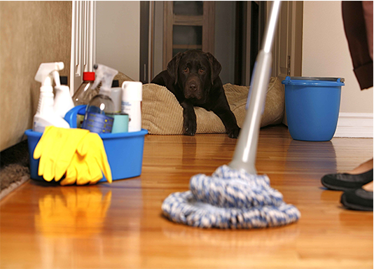 home cleaning with a dog